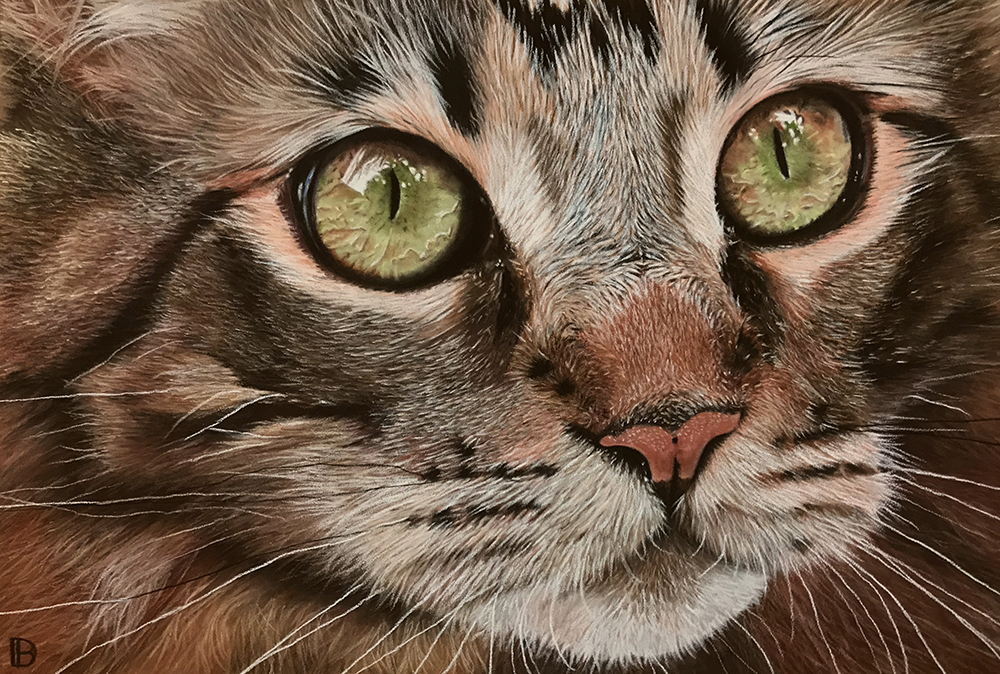 Tabby cat face close up pastel drawing