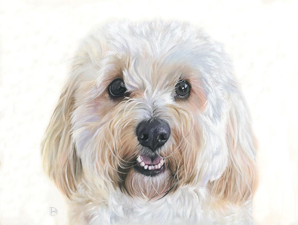 White cavapoo close up pastel pet portrait