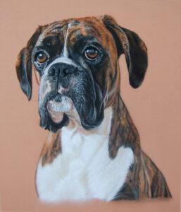 Boxer dog pastel drawing