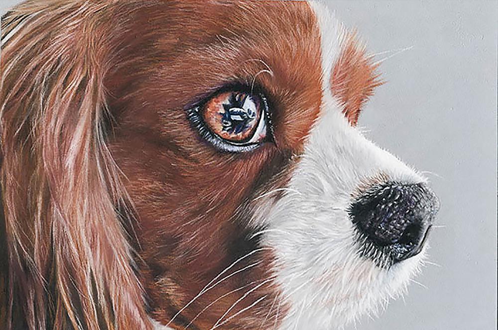 Cavalier face close up pastel pet portrait