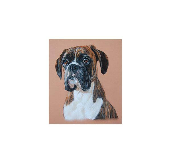 Boxer dog pastel pencil pet portrait